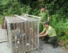 Thả 2 cá thể khỉ và 3 cá thể rắn ráo về môi trường tự nhiên