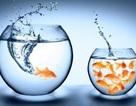 7 thách thức mang lại thành công