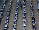 Hàng trăm học sinh tập trung làm bài thi giữa sân trường
