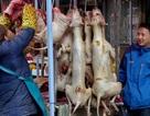 Bất chấp chỉ trích, lễ hội thịt chó vẫn được tổ chức như thường lệ