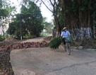 Thanh tra toàn diện diện tích đất khu sân bay Miếu Môn - xã Đồng Tâm