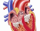 Sử dụng tế bào gốc - Đột phá trong điều trị suy tim
