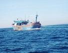 Tàu cá chết máy thả trôi trên biển
