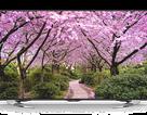 Tăng cường ngoạn mục số mẫu Smart TV trong năm 2017