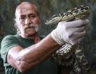 Úc: Trăn nghiện ma túy đá, phải vào tù để cai