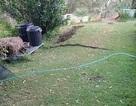 Tá hỏa phát hiện cành cây ngoài sân vườn thực chất là... trăn dài 2m