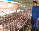 Những ông chủ trẻ khởi nghiệp từ nghề nông
