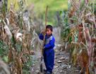 Các nước giảm viện trợ nhân đạo cho Triều Tiên