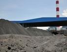 """Xỉ tro nhiệt điện """"đắt như tôm tươi"""" tại Nhật, Hàn, ở Việt Nam lại là rác thải"""