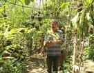 Vinh danh Khu bảo tồn lan rừng tự nhiên lớn nhất Việt Nam