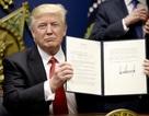 Tòa chặn lệnh cấm nhập cảnh của ông Trump trước giờ G