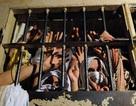 Bạo loạn trong nhà tù Brazil, ít nhất 60 người chết