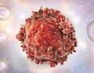 Thuốc tiểu đường tiêu diệt tế bào ung thư trong bệnh bạch cầu