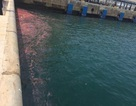 Lại xuất hiện dải nước biển màu đỏ tại cảng Sơn Dương