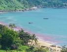 Vệt nước màu đỏ trên biển Đà Nẵng là... trứng ruốc