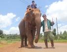 Con voi nhà cuối cùng của người M'Nông
