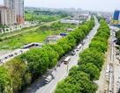 Vì sao Hà Nội cân nhắc thay thế 4.000 cây xà cừ?