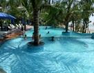Công ty du lịch ngang nhiên phá rừng phòng hộ để... xây bể bơi