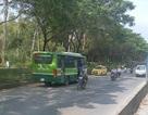 Đình chỉ tài xế lái xe buýt chạy ngược chiều trên phố Sài Gòn