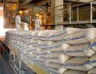 """Bộ Kế hoạch đề nghị giảm thuế xuất khẩu để """"giải cứu"""" xi măng dư thừa"""