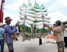 Giá và lượng gạo xuất khẩu Việt Nam đang giảm mạnh