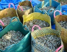Xuất khẩu tôm sang Trung Quốc sẽ tăng mạnh
