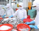 Nhật Bản thay thế Hoa Kỳ trở thành nước nhập khẩu tôm lớn nhất từ Việt Nam