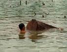 """Lặn xuống lòng hồ tìm... gỗ lậu """"khủng"""""""