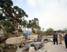 Cận cảnh cặp cây duối cổ được trả giá 15 tỷ đồng