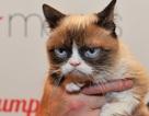 """""""Cô mèo cáu kỉnh"""" thắng kiện 710.000 USD tại Mỹ"""