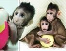 Các nhà khoa học Trung Quốc lần đầu tiên nhân bản thành công khỉ
