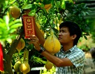 Bưởi Diễn 50 triệu đồng một cây đổ về Sài Gòn bán Tết