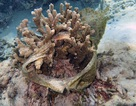 Rác nhựa đại dương đang giết chết các rạn san hô