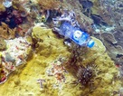 """Một phần ba các rạn san hô """"bị nhựa vướng vào"""""""