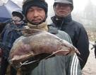 Hai loài cá sông suối cực ngon của vùng núi Lào Cai
