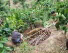 Vụ giết chủ nợ phi tang xác trong vườn cà phê: Khởi tố bị can tội giết người, cướp tài sản