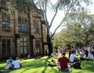 Ngày hội thông tin Đại học Sydney - Cơ hội cho học sinh Việt Nam