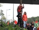 Người dân trèo lên cây, nhảy ra giữa đường... chào đón U23 Việt Nam trở về