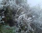Băng tuyết phủ dầy trên đỉnh Mẫu Sơn