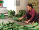 """Nhiều nông dân kiếm trăm triệu nhờ trồng sim, """"nhặt lá"""" tre rừng"""