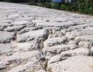 Đê hữu sông Hồng bị băm nát, sụt lún nghiêm trọng!