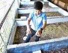 8x kiếm tiền tỷ mỗi năm nhờ khởi nghiệp nuôi bọ cạp, rắn mối… ở Hà Nội