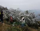 Hình ảnh băng giá tuyệt đẹp ở đỉnh Mẫu Sơn - Lạng Sơn
