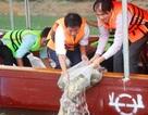 Phóng sinh hàng tấn cá để tái tạo nguồn lợi thủy sản