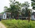 Thủ phủ đá đỏ Quỳ Châu: Giấc mơ thoát nghèo trên vùng đất bạc tỷ