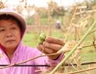 Hà Nội: Vườn dược liệu trị giá hàng trăm triệu bị chặt phá trong đêm