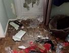 Cún cưng phá phòng tan hoang vì bị chủ nhốt trong nhà