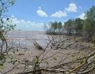 Mỗi năm Cà Mau mất vài trăm ha rừng phòng hộ do sạt lở