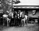 Người Mỹ di chuyển những ngôi nhà ở thế kỉ 18 như thế nào?