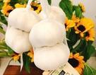 Cuồng hàng Nhật: Mua củ tỏi 100 ngàn đồng về xào mớ rau muống